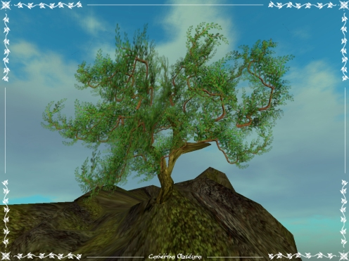 Bonzai Tree by Caverna Obscura