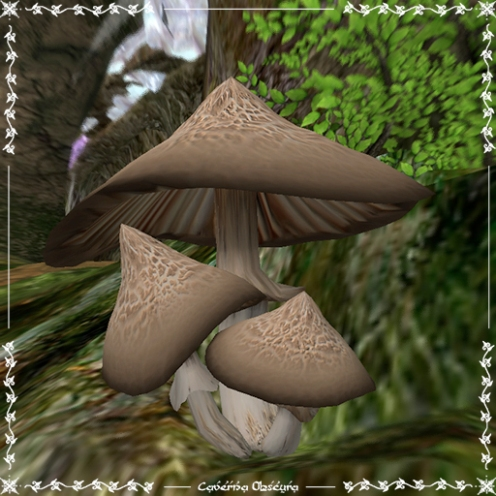Brown Mushrooms by Caverna Obscura